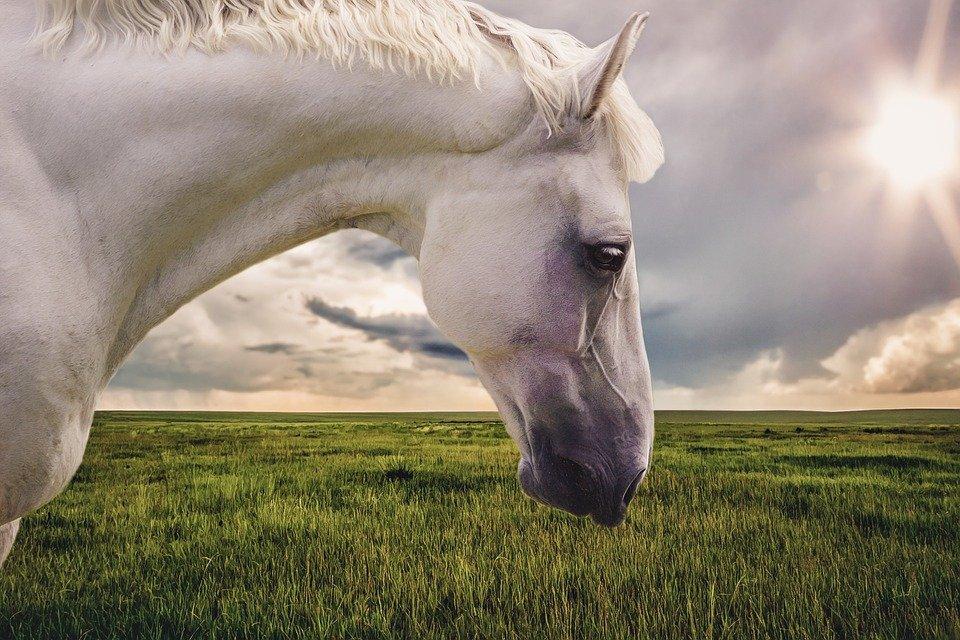 Witte Paarden / Baars (ilovegiethoorn.nl)