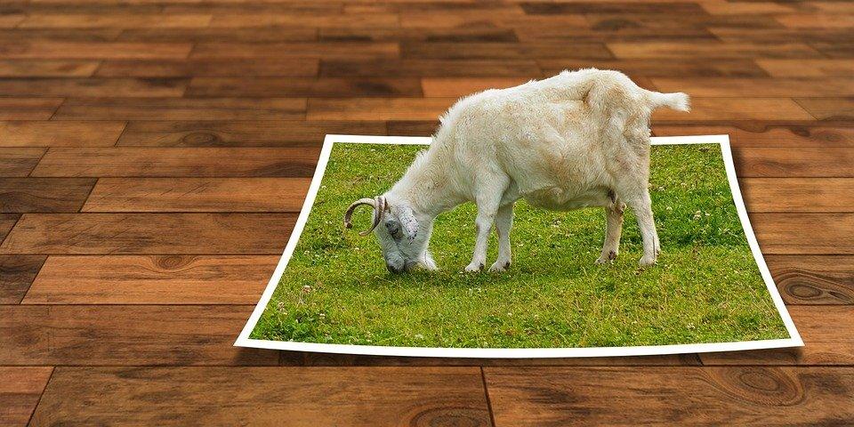 Boer on tour (ilovegiethoorn.nl)